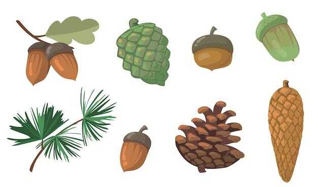 Eicheln und tannenzapfen gesetzt. kiefernzweig, tannenzapfen, eichenblatt isoliert. flache vektorillustrationen für herbst, herbst, natur, waldkonzept Kostenlosen Vektoren
