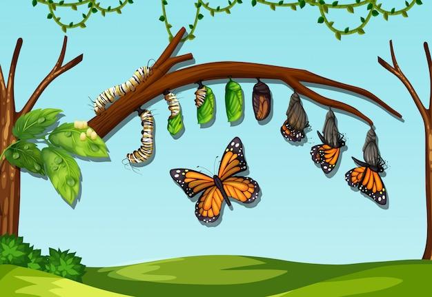 Ein butterfliegen-lebenszyklus Premium Vektoren
