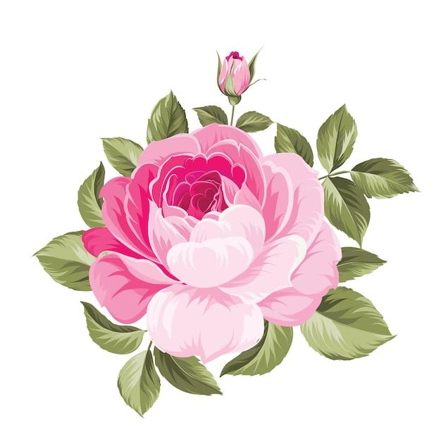 Ein dekorativer blumenstrauß des frühlinges von rosenblumen. Premium Vektoren