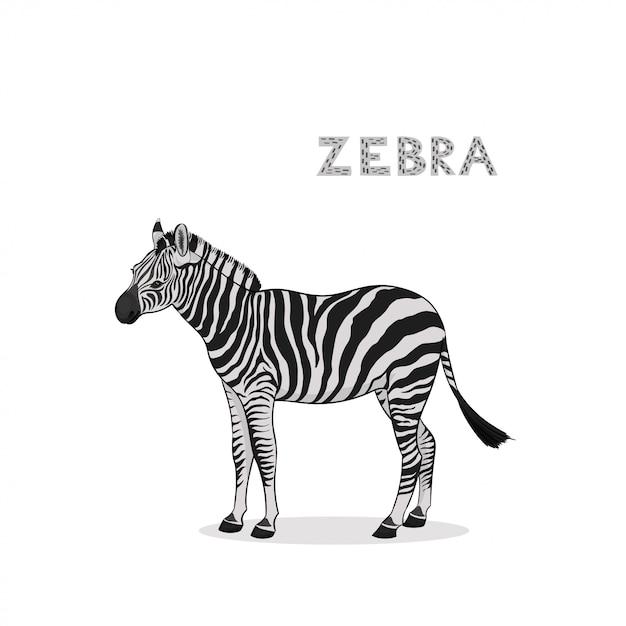 Ein karikaturzebra, getrennt. tierisches alphabet. Premium Vektoren