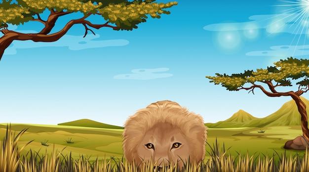Ein löwe in der savannah-szene Kostenlosen Vektoren