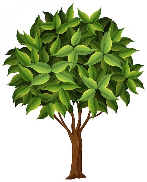 Ein naturbaum auf weißem hintergrund Kostenlosen Vektoren