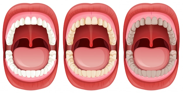 Ein satz der menschlichen mund-anatomie Kostenlosen Vektoren