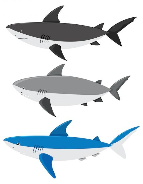 Ein satz haifische auf weißem hintergrund Kostenlosen Vektoren