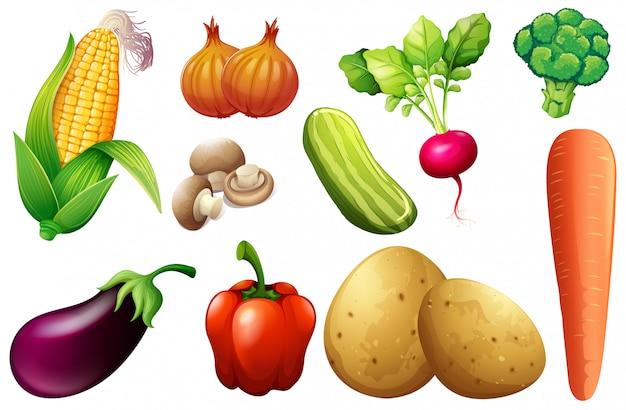Ein satz organisches gemüse Premium Vektoren