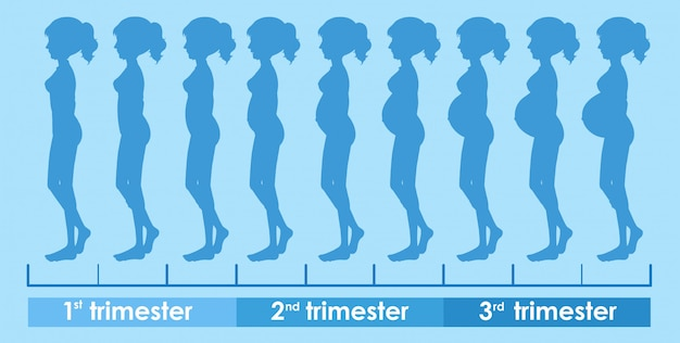 Ein vektor des schwangerschafts-fortschritts Kostenlosen Vektoren