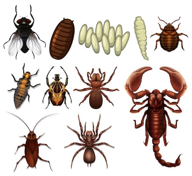 Eine reihe von insekten Premium Vektoren