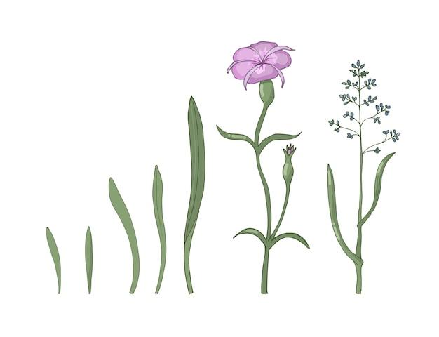 Eine reihe von wilden blumen und kräutern lokalisiert auf einem weißen hintergrund. handgezeichnete illustration. Premium Vektoren
