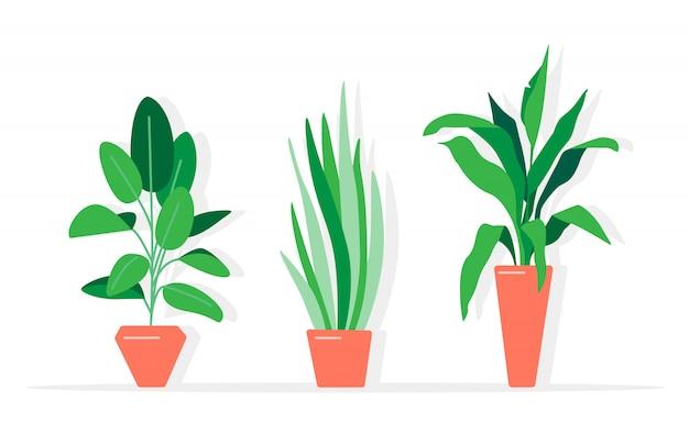 Eine sammlung von zimmerpflanzen und blumen Premium Vektoren