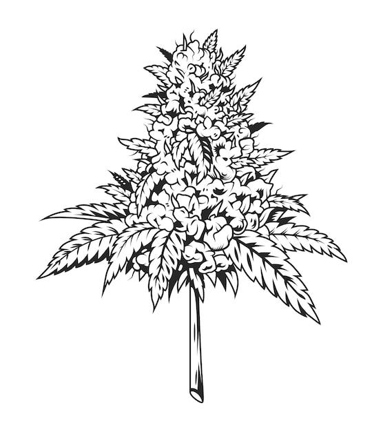 Einfarbige marihuana-pflanze der weinlese Premium Vektoren