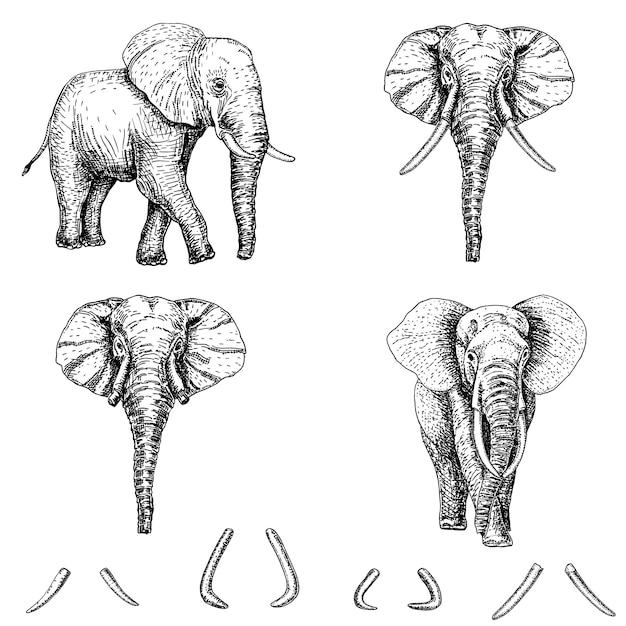 Elefantenskizzen-ikonensatz gezeichnete illustration des eises hand. elefantentätowierungskunst oder druckdesign. Premium Vektoren
