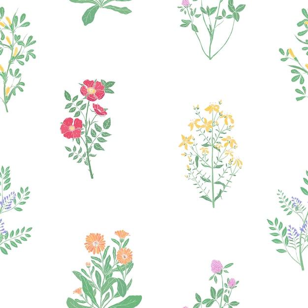Elegantes botanisches nahtloses muster mit wiesenheilkräutern Premium Vektoren