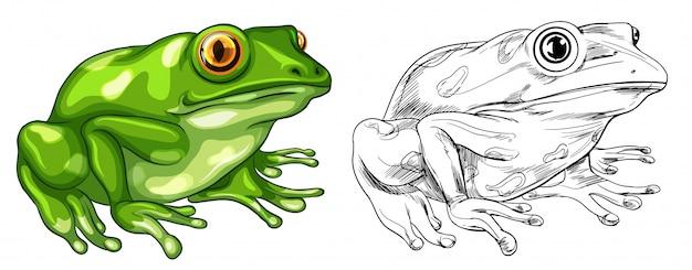 Entwurf und farbiges bild des frosches Kostenlosen Vektoren