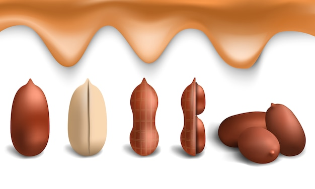 Erdnuss-icon-set. realistischer satz erdnussvektorikonen für webdesign Premium Vektoren