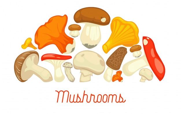 Essbares pilzartiges plakat der pilze. vector flachen champignon- und steinpilz- oder waldpfifferlings- und -hummerpilz Premium Vektoren