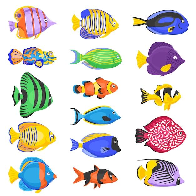 Exotische fische eingestellt Kostenlosen Vektoren