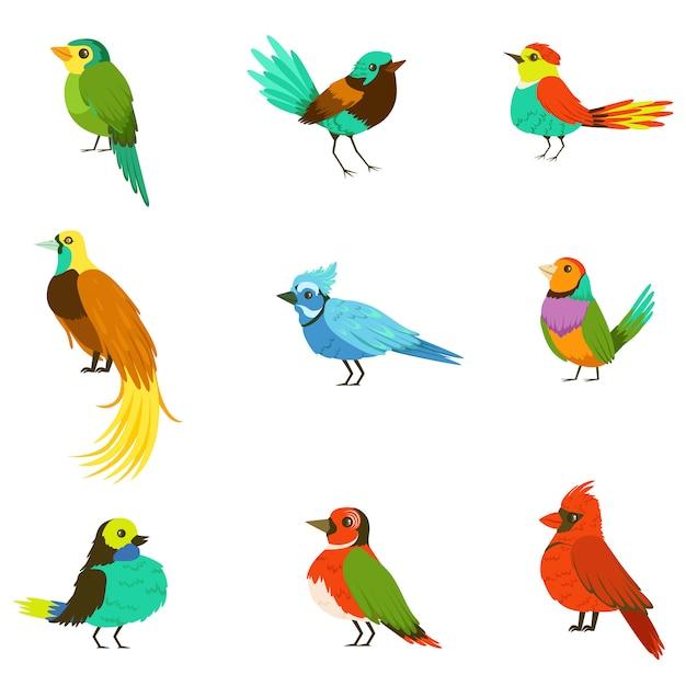 Exotische vögel aus dem dschungel regenwald sammlung von bunten tieren einschließlich arten von paradiesvögeln und papageien Premium Vektoren