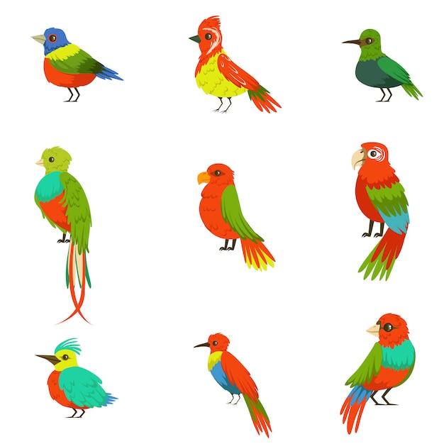 Exotische vögel aus dem dschungel regenwald satz bunte tiere einschließlich arten von paradiesvögeln und papageien Premium Vektoren
