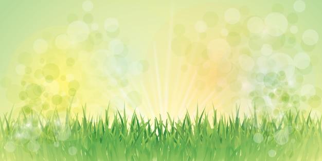 Fairy gras hintergrund Premium Vektoren