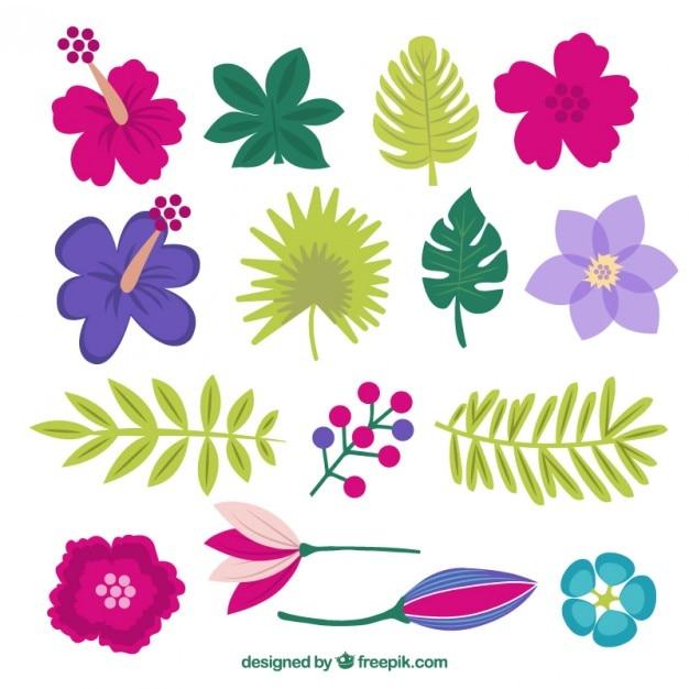 Farbige exotischen Blumen mit verschiedenen Blättern | Download der ...