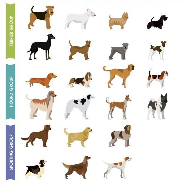 Farbige hunde-sammlung Kostenlosen Vektoren