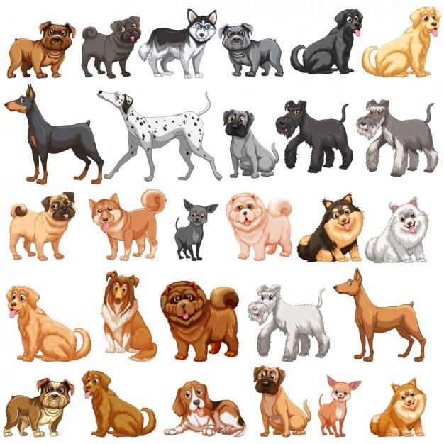 Farbige hunde-sammlung Premium Vektoren