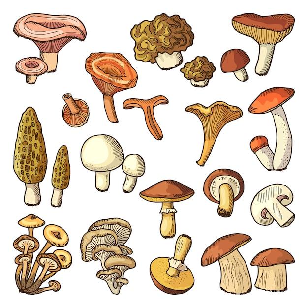 Farbige naturvektorillustrationen von pilzen. Premium Vektoren