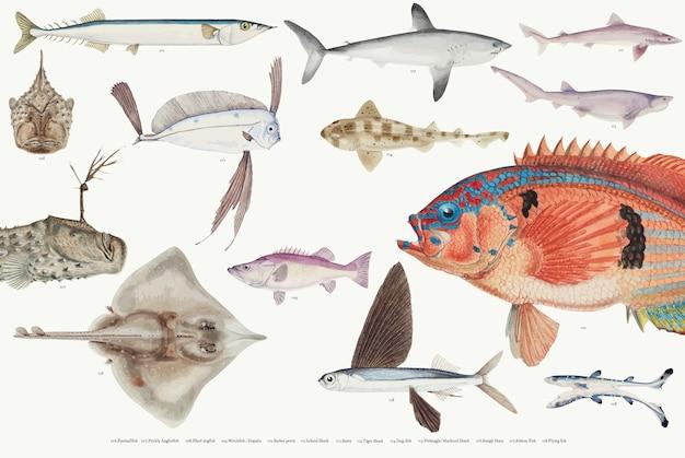 Farbige vektorillustration der fischzeichnungssammlung Kostenlosen Vektoren