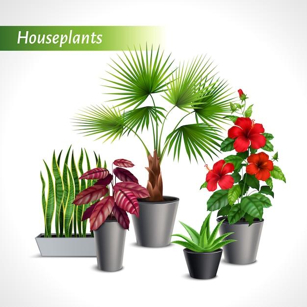 Farbige zimmerpflanzen realistische zusammensetzung mit grüner flora in blumentopfillustration Kostenlosen Vektoren