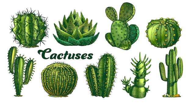 Farbwüstenpflanzen-kaktusillustration. Premium Vektoren
