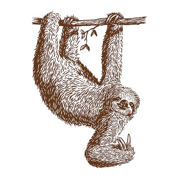 Faultier hängen vektor gravur illustration Premium Vektoren