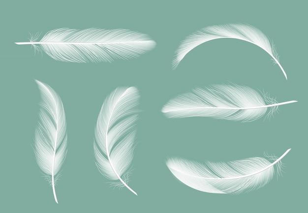 Federn-auflistung. fliegendes pelz von den realistischen bildern der gans lokalisiert auf transparentem Premium Vektoren