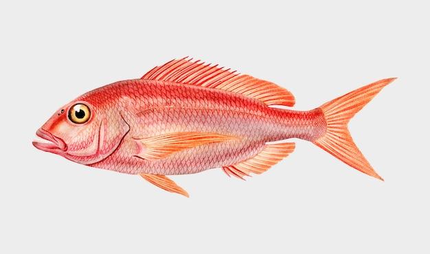 Fisch Kostenlosen Vektoren