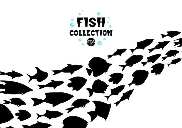 Fischsammlung. cartoon-stil abbildung von zwölf verschiedenen fischen Kostenlosen Vektoren