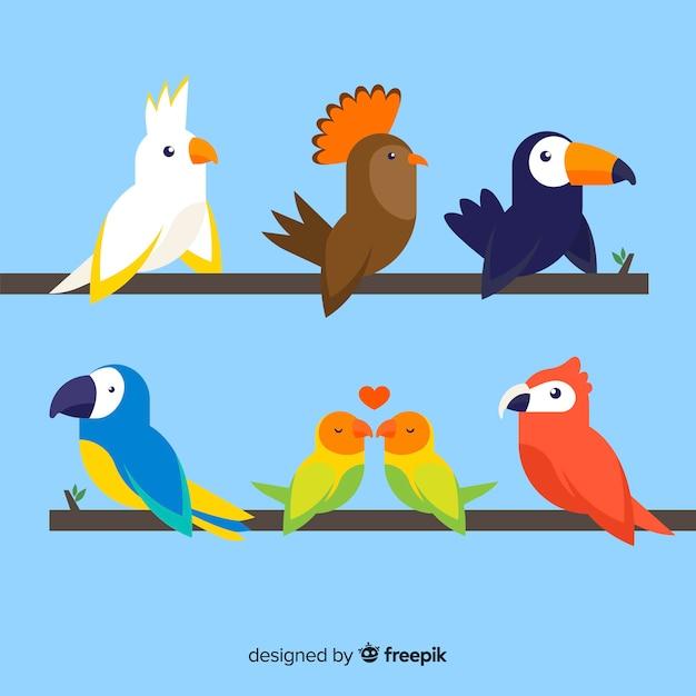 Flaches design der bunten exotischen vogelsammlung Kostenlosen Vektoren