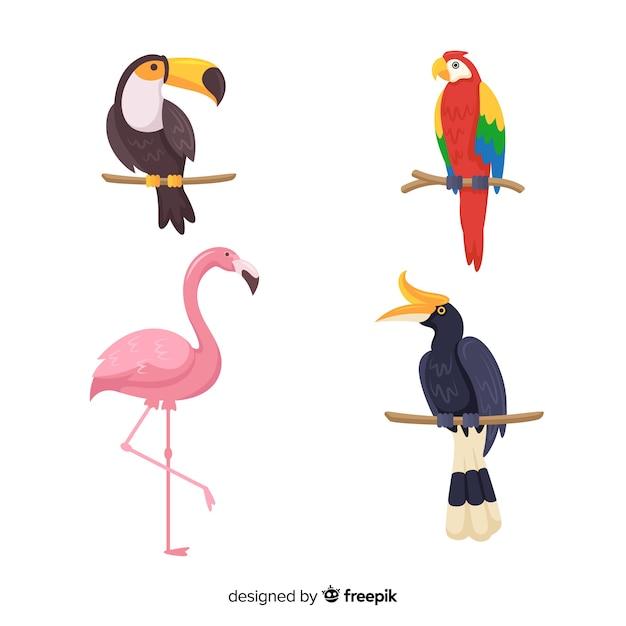 Flaches design exotische vögel sammlung Kostenlosen Vektoren