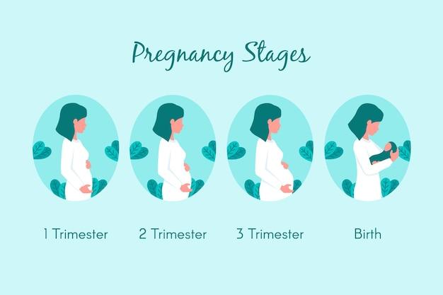 Flaches design schwangerschaftsstadien eingestellt Kostenlosen Vektoren