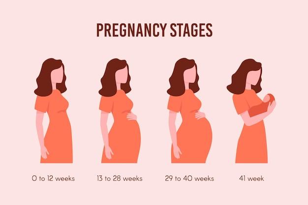 Flaches design schwangerschaftsstadien pack Kostenlosen Vektoren