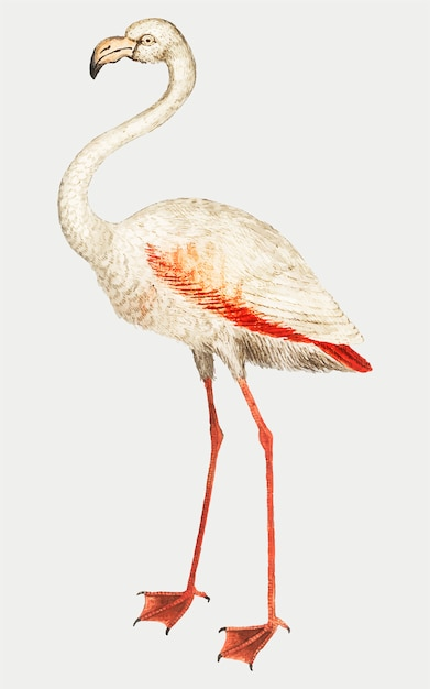 Flamingo im vintage-stil Kostenlosen Vektoren