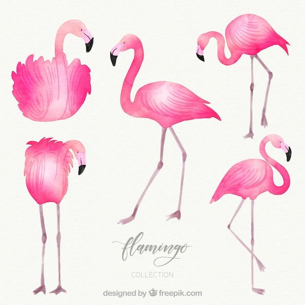 Flamingos sammlung mit verschiedenen haltungen in aquarell-stil Kostenlosen Vektoren