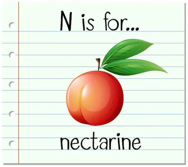Flashcard buchstabe n ist für nektarine Kostenlosen Vektoren
