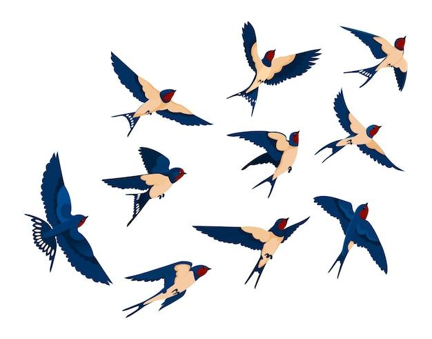 Fliegende vogel verschiedene ansicht sammlungssatz. schwalbenschwarm lokalisiert auf weißem hintergrund. karikaturillustration Kostenlosen Vektoren