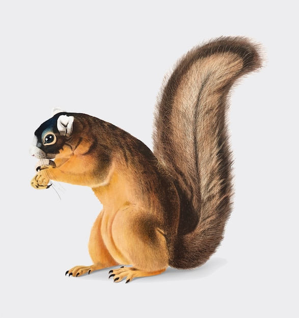 Fox-eichhörnchenillustration Kostenlosen Vektoren