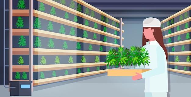 Frau trägt cannabispflanzen industrielle hanfplantage innen legal cbd marihuana konzept drogenkonsum agribusiness horizontales porträt Premium Vektoren