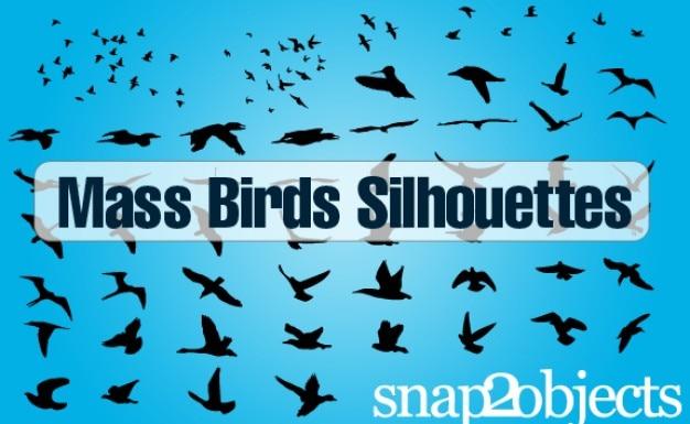 Freien vektor vögel Kostenlosen Vektoren