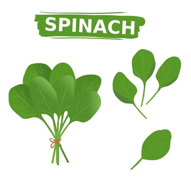 Frische grüne spinatsammlung stellte auf lokalisierten weißen hintergrund ein Premium Vektoren