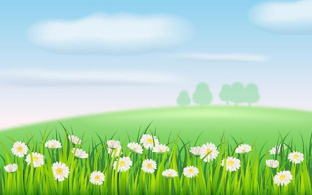Frühlingsfeld der blumen der gänseblümchen, der kamille und des grünen saftigen grases, der wiese, des blauen himmels, der weißen wolken Premium Vektoren