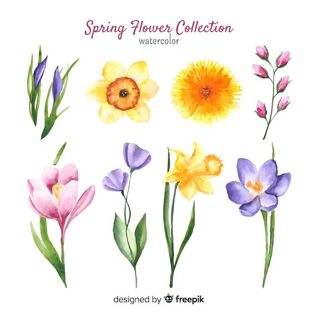 Frühlingsblumen Sammlung Download Der Kostenlosen Vektor