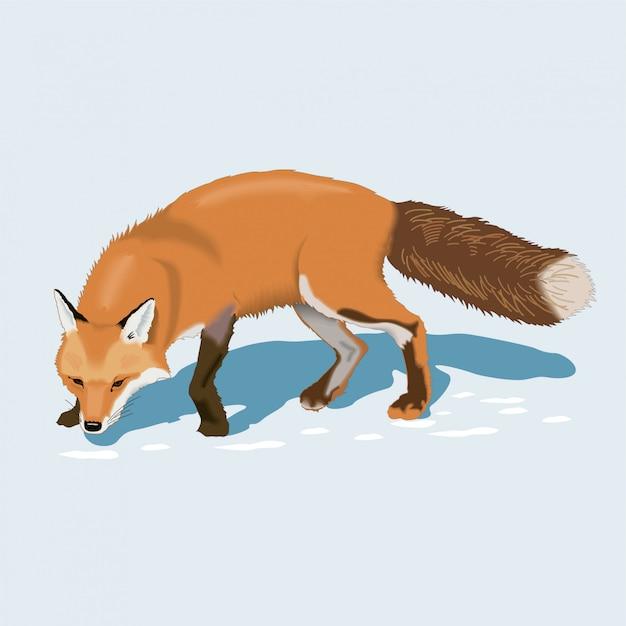 Fuchs im schnee Premium Vektoren