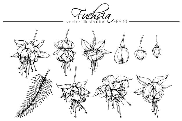 Fuchsiafarbene Blumen Zeichnen Download Der Premium Vektor